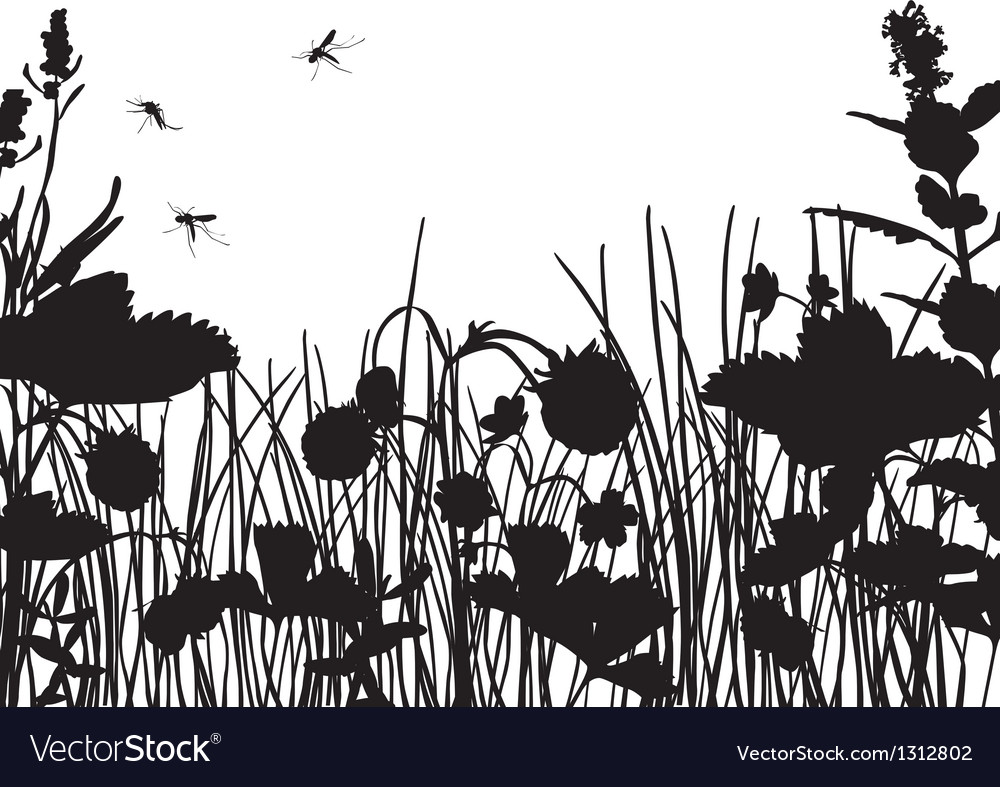 Strawberry field silhouette vector image
