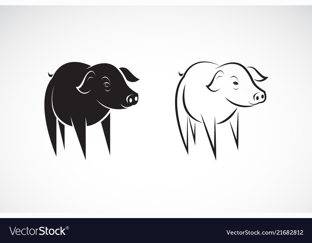 Little pig design on a white background farm