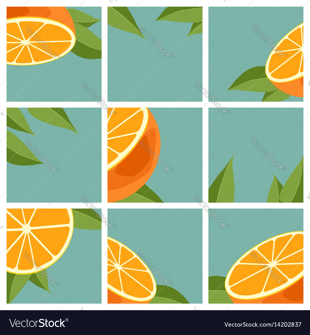 Orange citrus fruit vector image