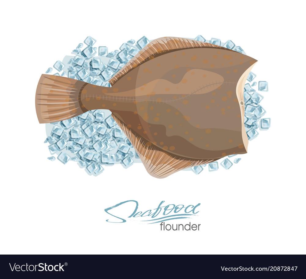Olive flounder sea fish on