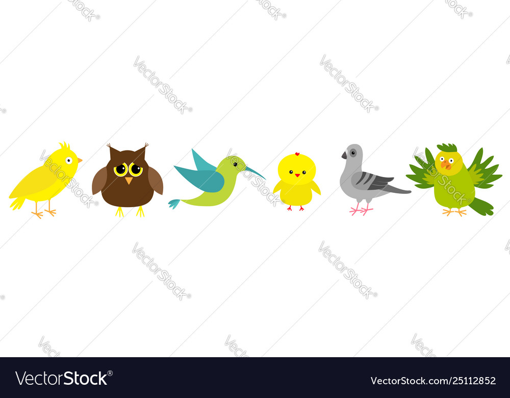 Bird set line colibri canary parrot dove pigeon