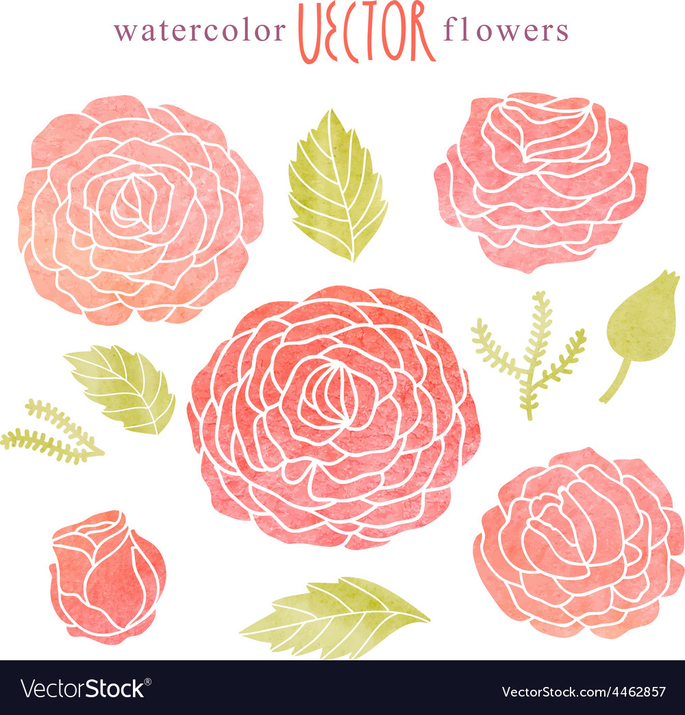 Cute watercolor rose set