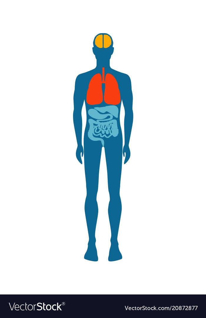 Human body infographic man