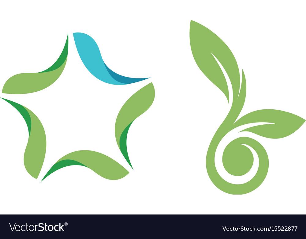 Leaf Logo Symbol Star Leaf Seed Logo Template Vector Image