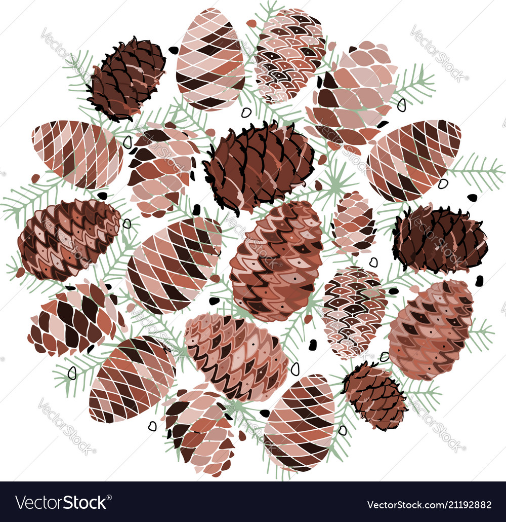 Cedar cone background sketch for your design vector image