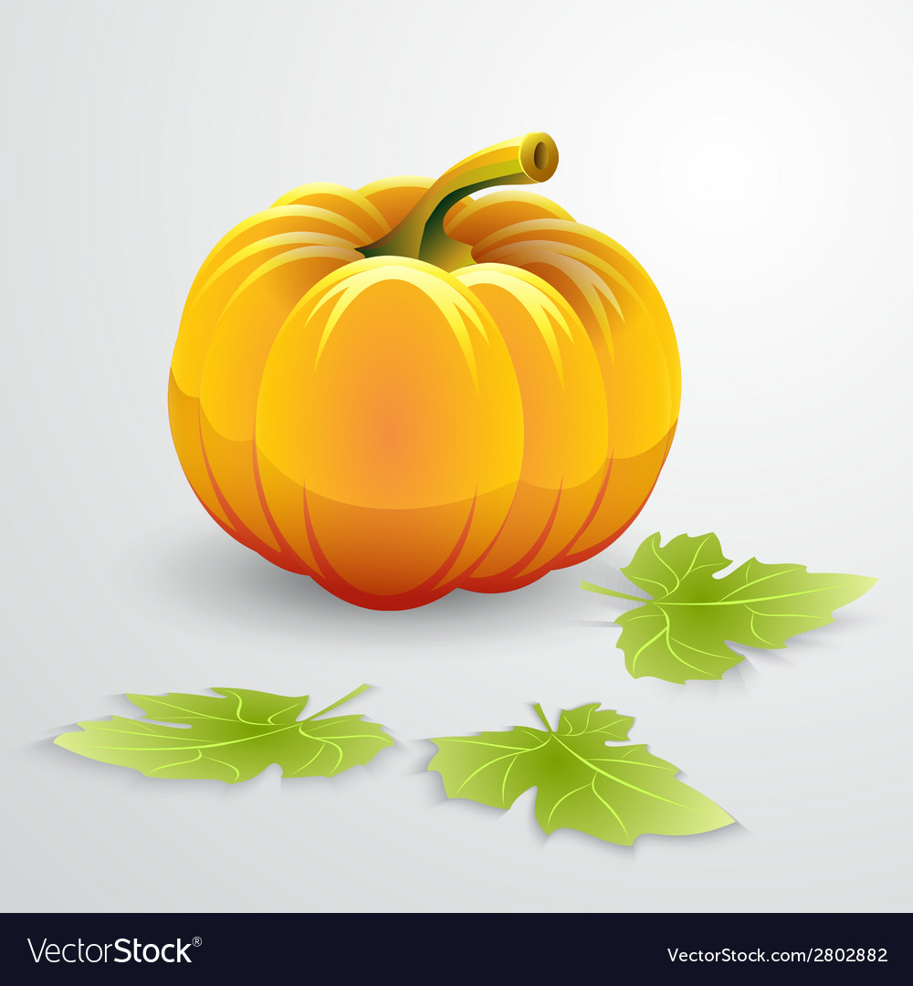 Orange pumpkin and green leaves vector image