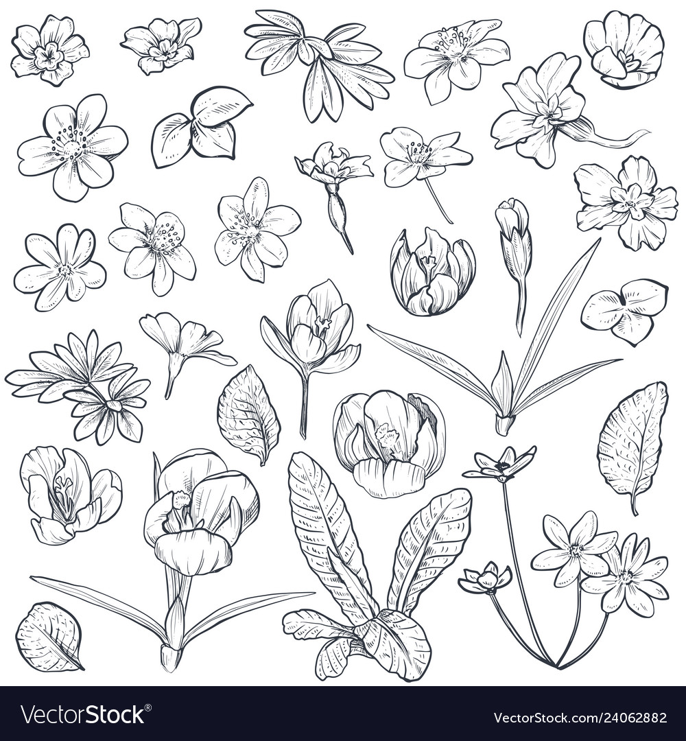 Set of hand drawn spring flowers and leaves