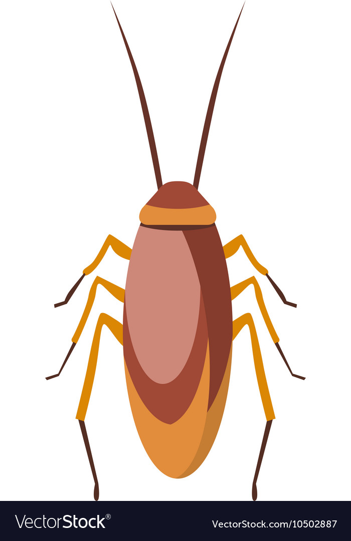 Cockroach bug cartoon flat vector image