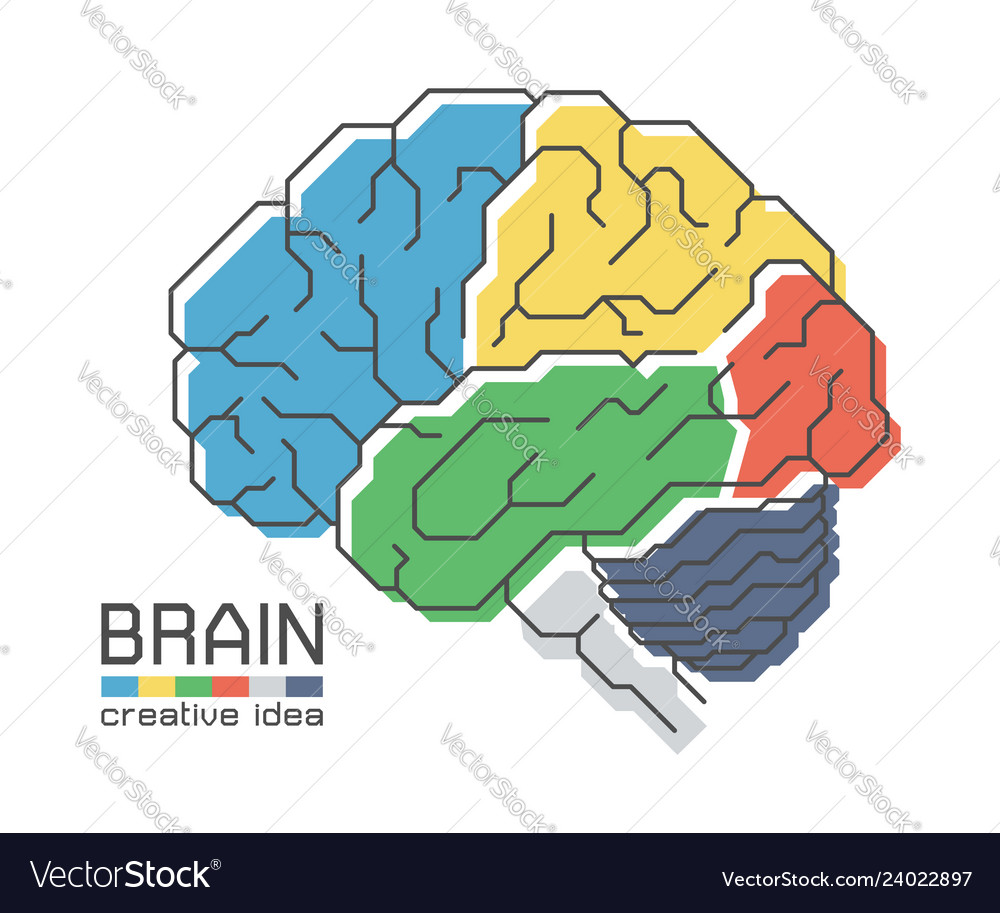 Brain anatomy with flat color design and outline