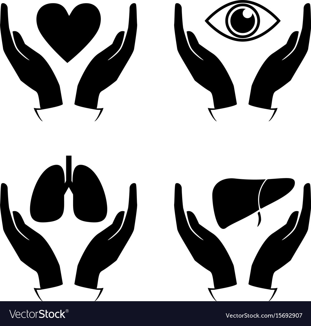 Hand hold heart eye lung liver icons vector image