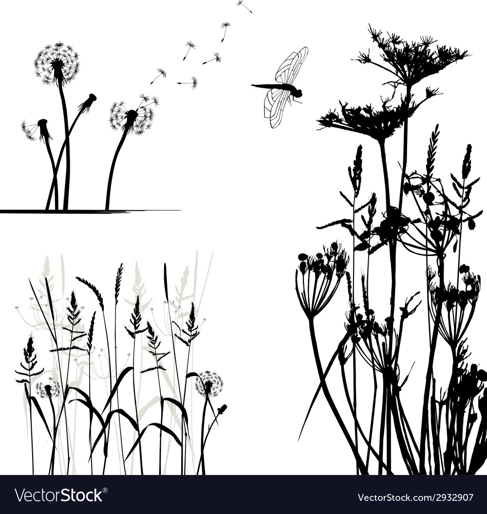 Wild plant and dragonfly vector image