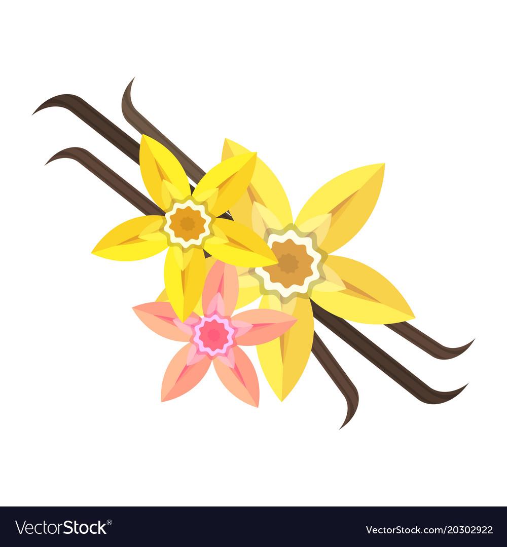 Vanilla flower flat vector image