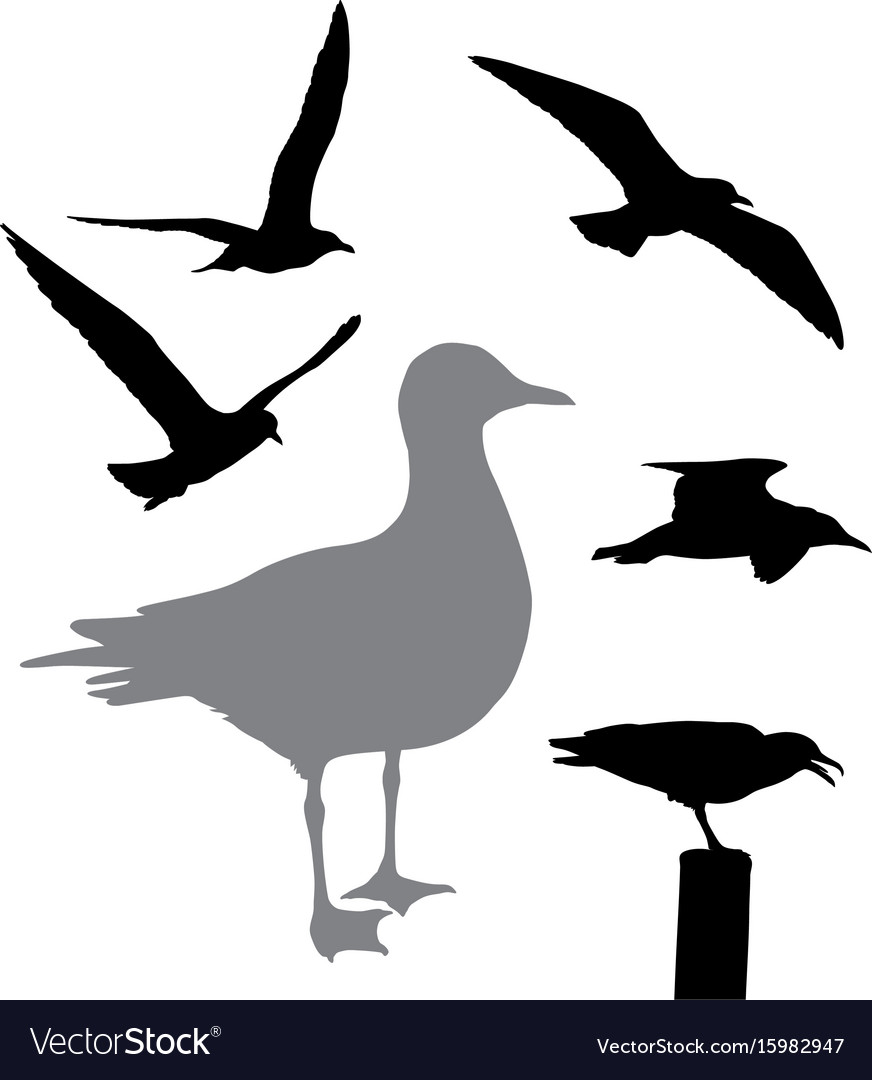 Seagull collection