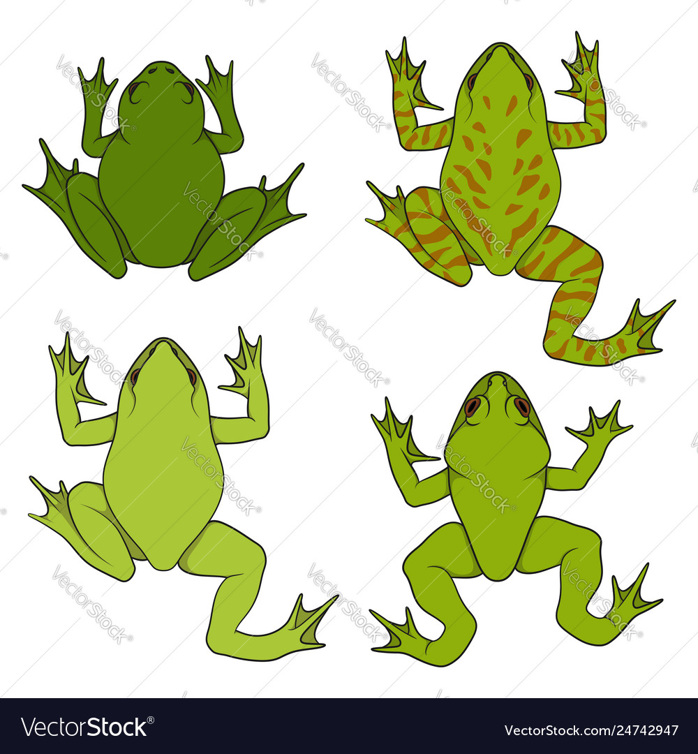 Set color with water river frogs