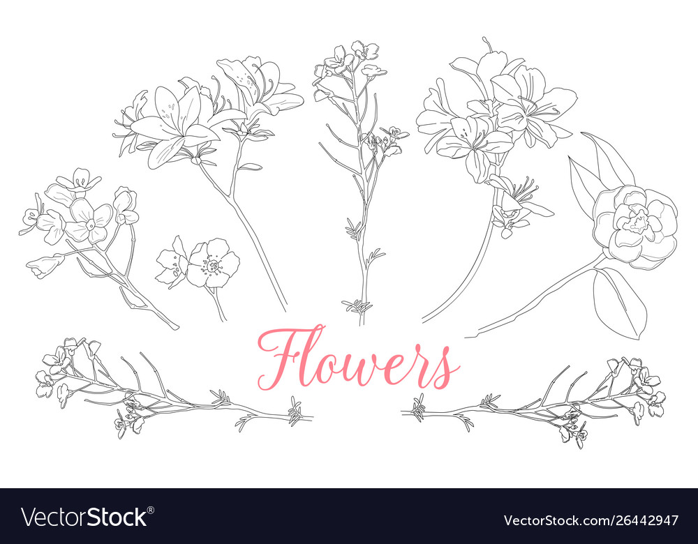 Wild rose flowers drawing and sketch with line-art