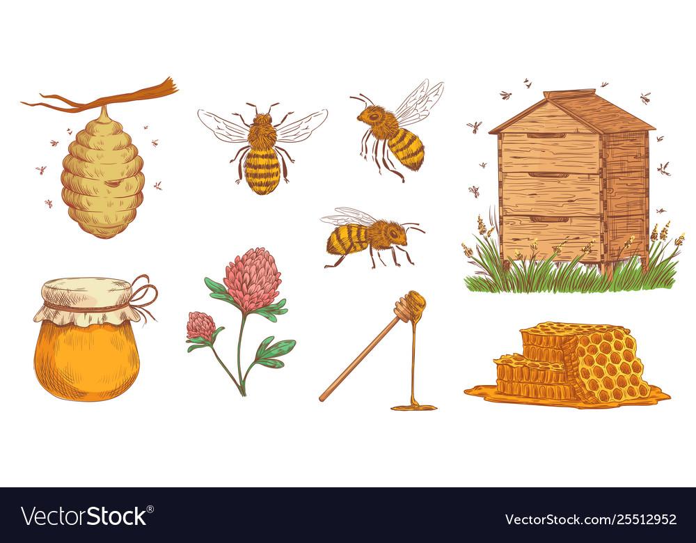 Hand drawn honey bee beekeeper engraving bees