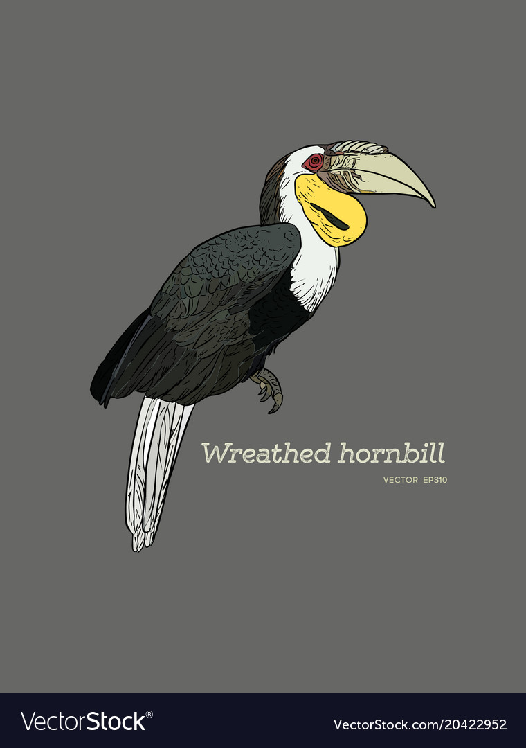 Wreathed hornbill hand draw sketch vector image