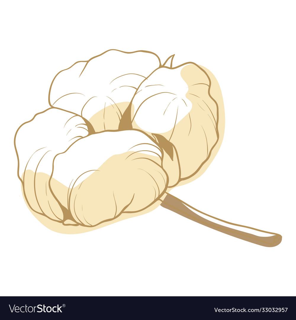 Cotton flower soft fluffy blossom for decoration