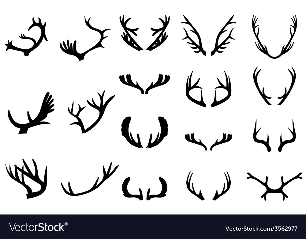 Collection of deer horns vector image