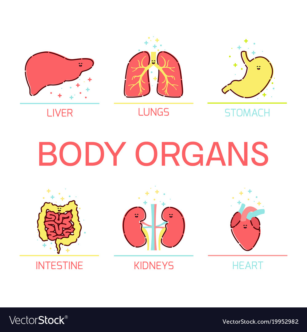 Body organs cartoon set Royalty Free Vector Image