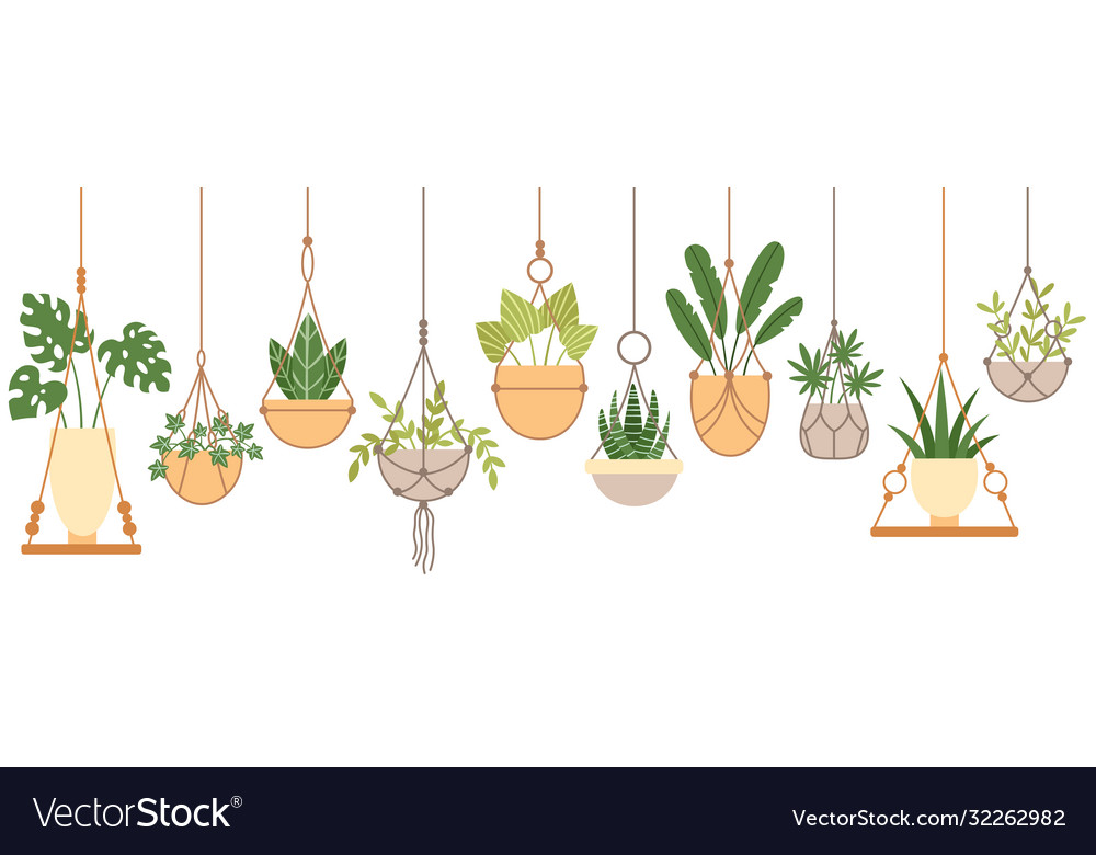 Plants in hanging pots set vector