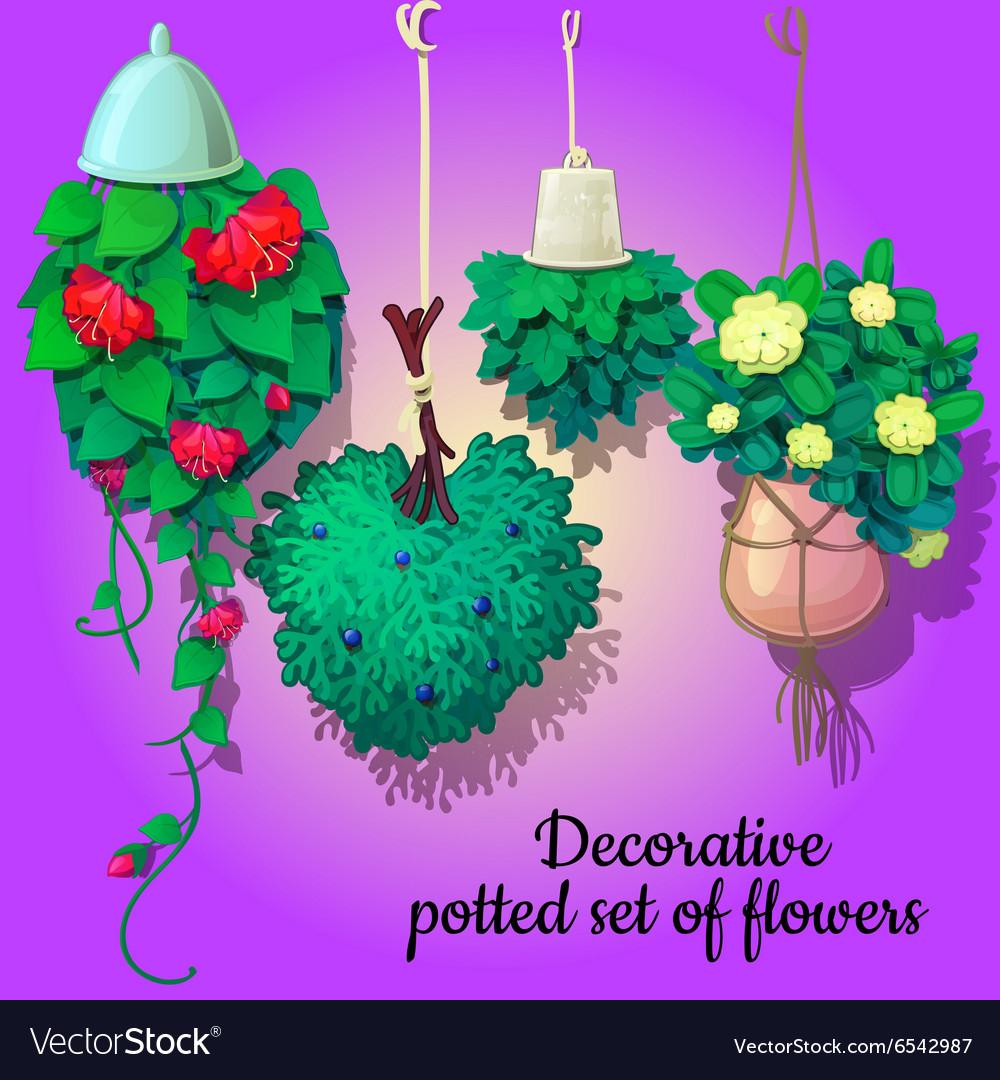 Set of suspended ornamental plants flowers vector image