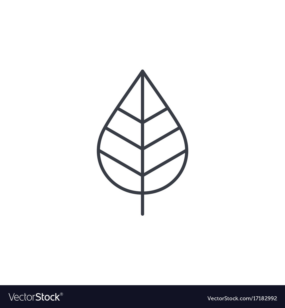 Leaf green eco thin line icon linear vector image