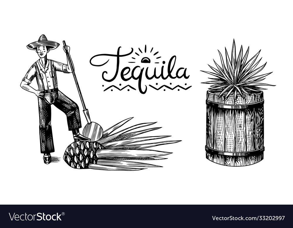 Harvesting agave farmer with fruit and a wooden