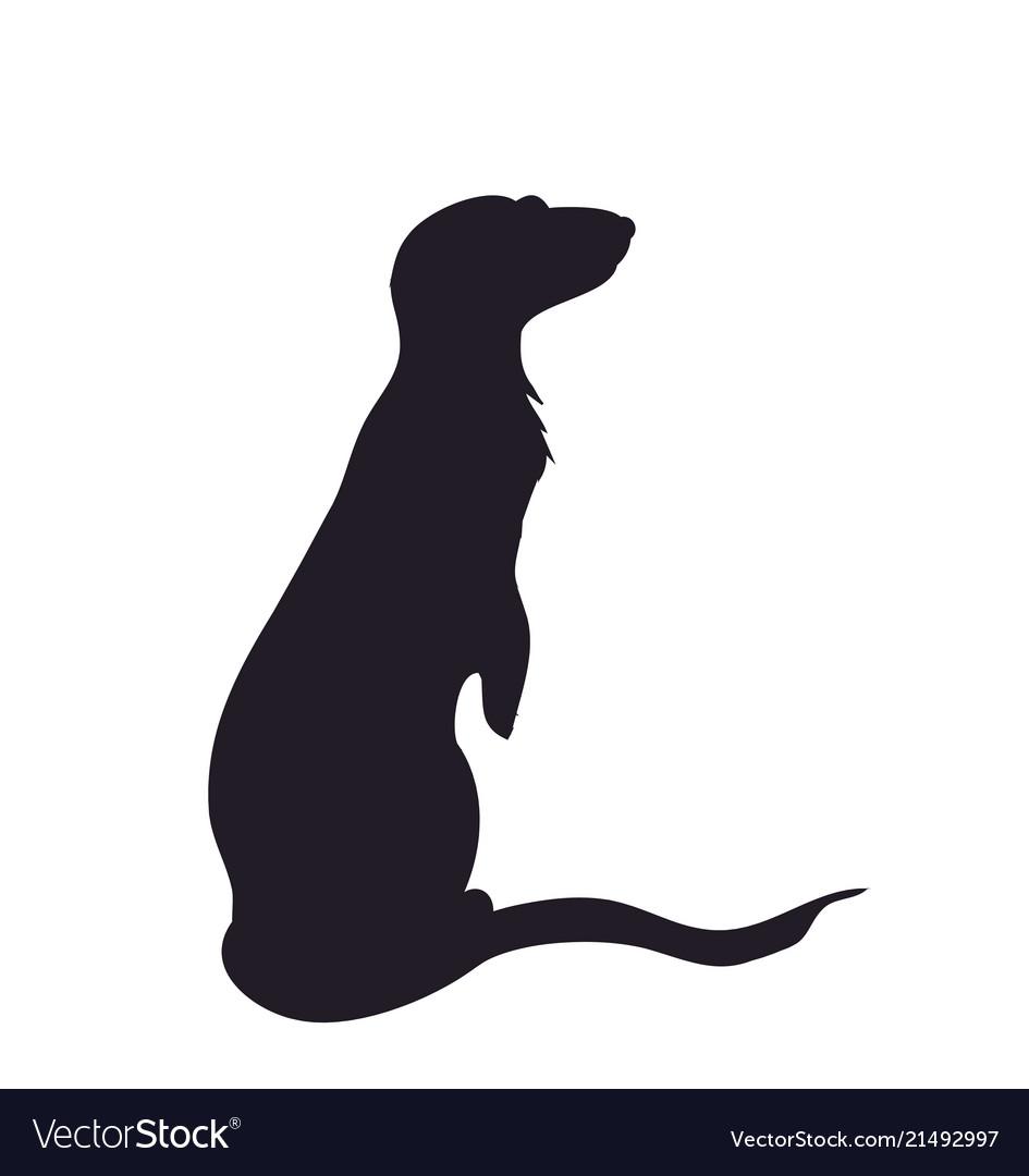 Silhouette of a meerkat