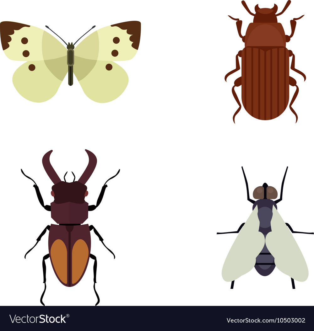 Insect icons flat set isolated on white background