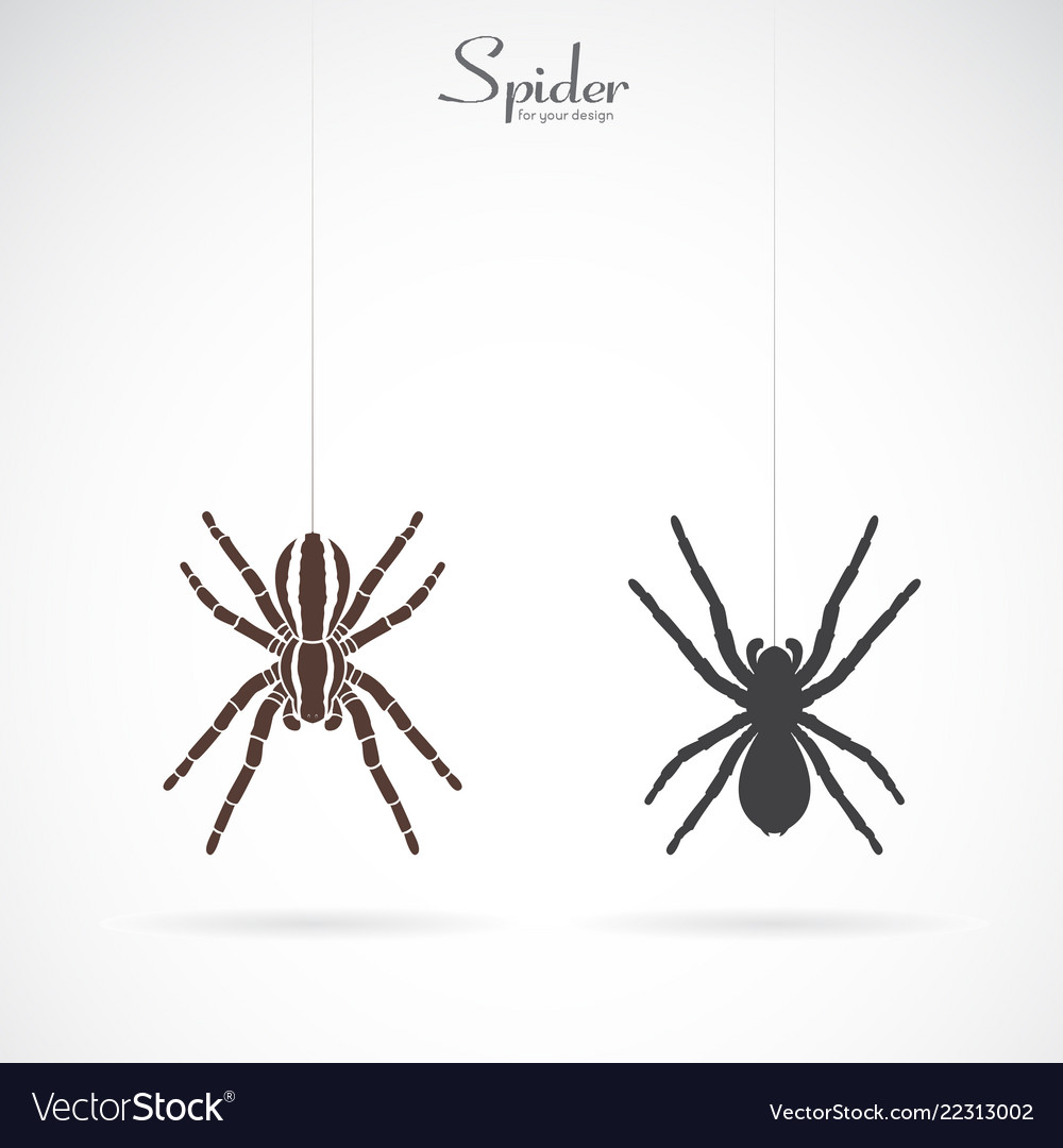 Spider on white background insect animal spider