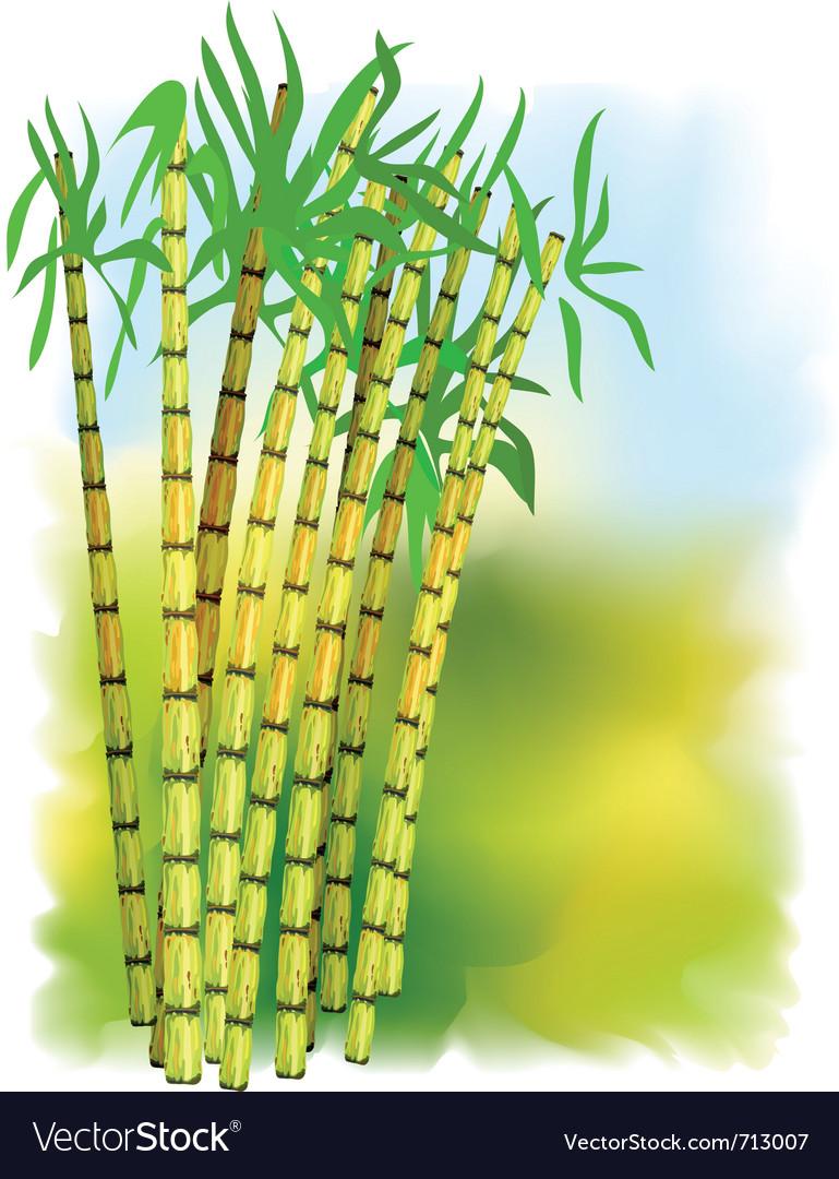 Plant of sugar cane vector image