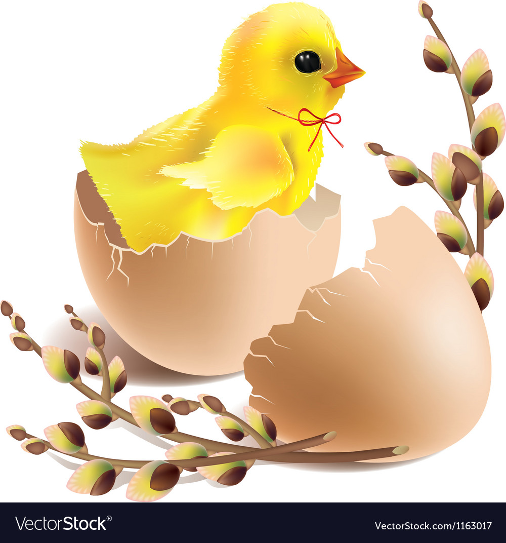 easter baby chick hatched royalty free vector image