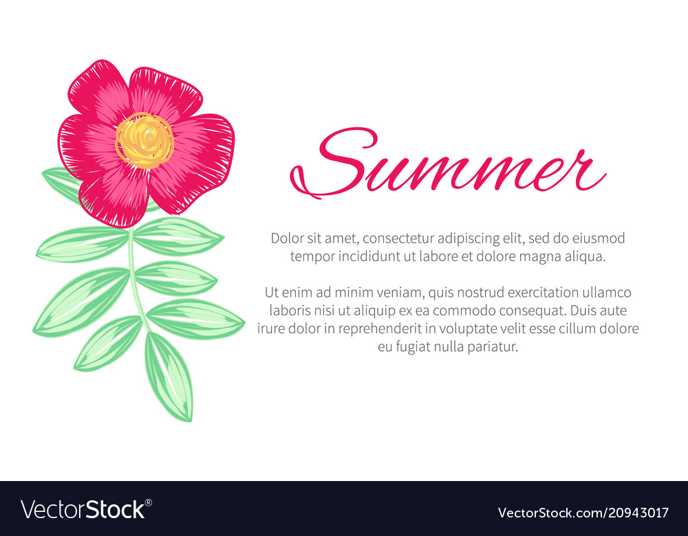 Summer theme colorful poster