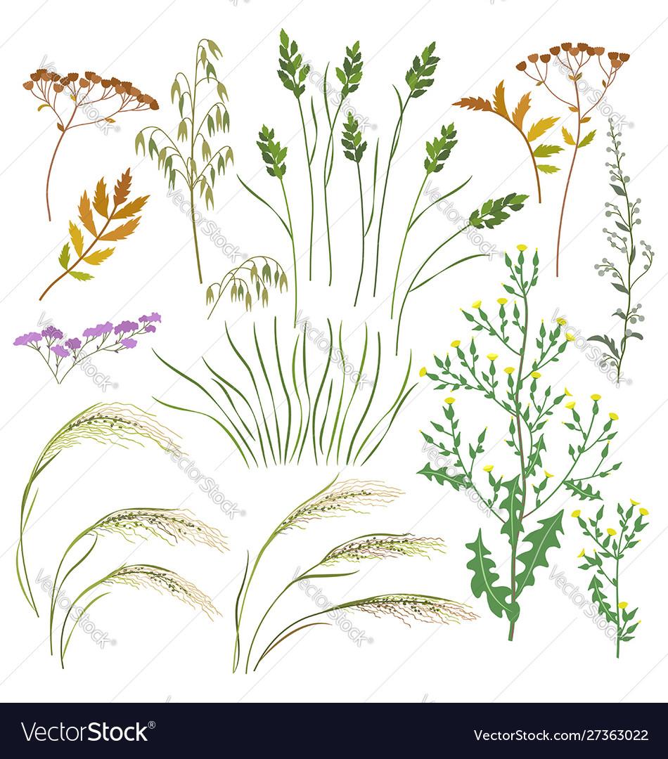 Wild herbs and cereals set