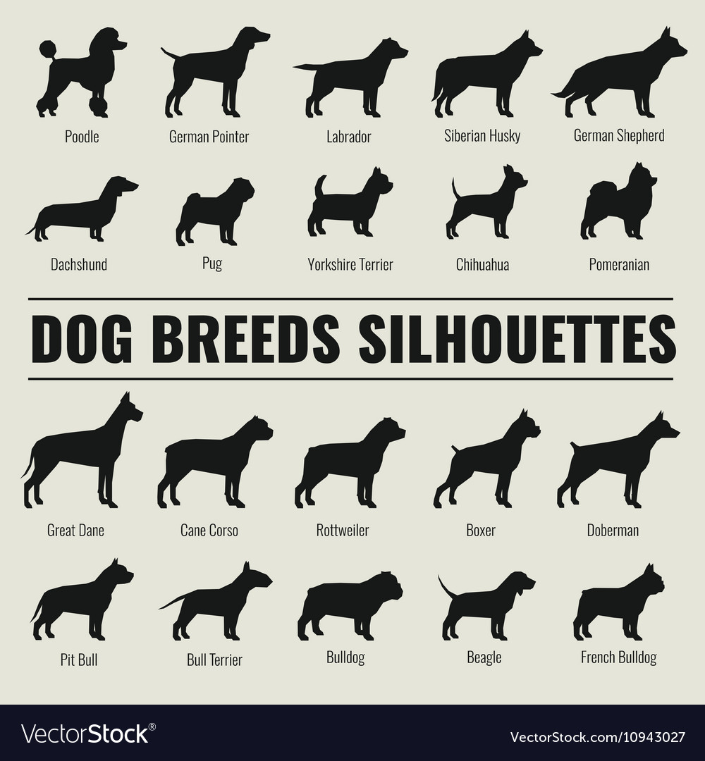 Dog breeds silhouettes set vector image