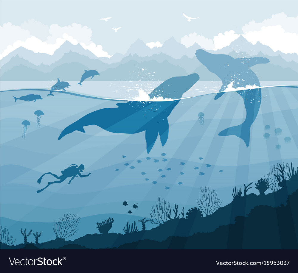 Diver and whales with dolphins jellyfish fish vector image