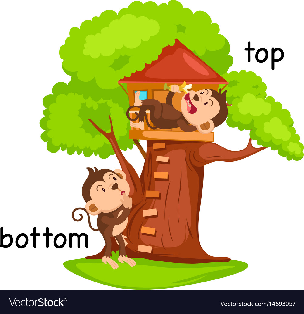 Opposite words bottom and top Royalty Free Vector Image