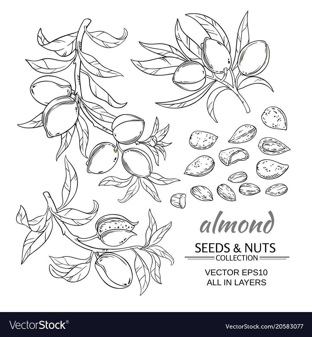 Almond set
