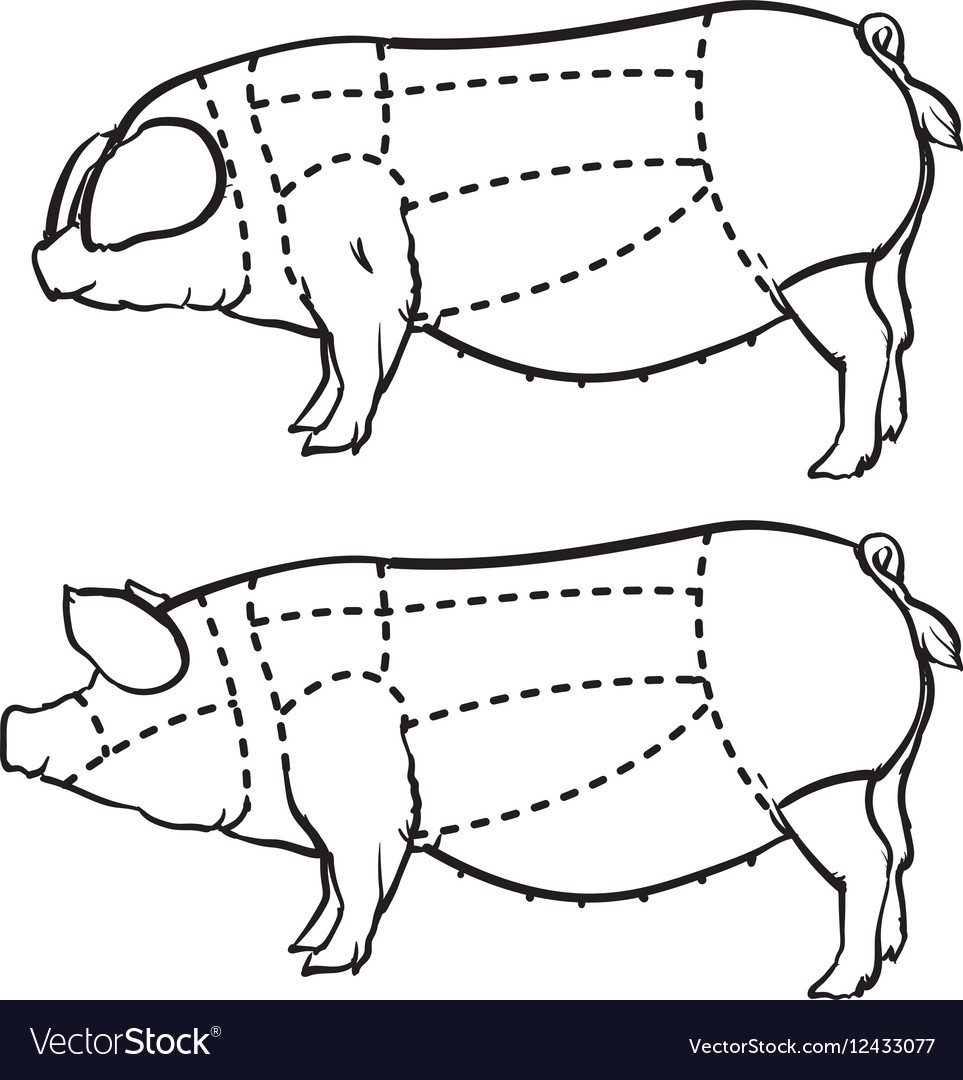 Hand drawn outline pig