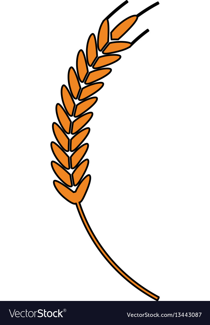 Wheat ear icon image
