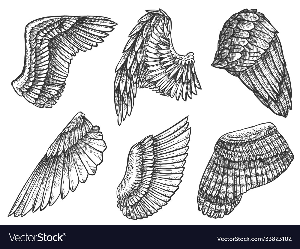 Sketch wings hand drawn eagle angel detailed