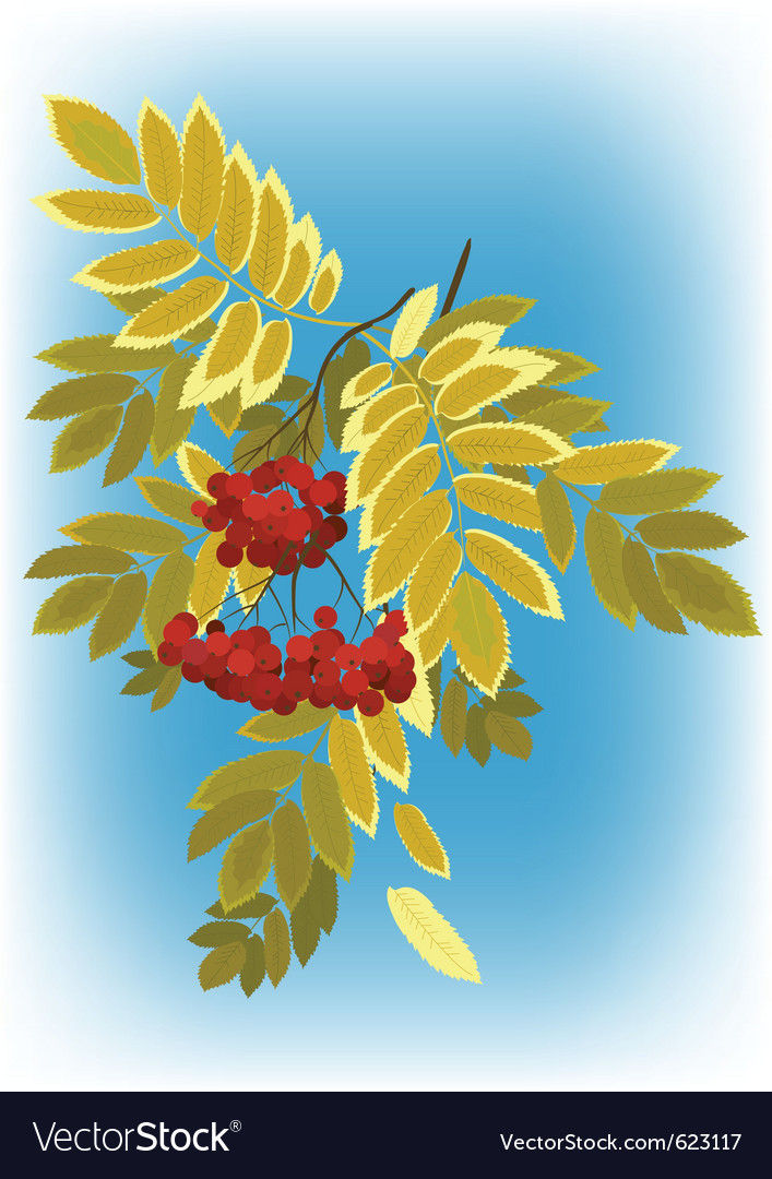 Autumn rowan branch with berries and leaves yellow