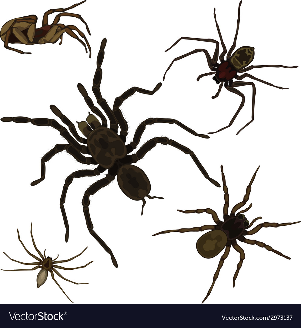 Spider set vector art - Download Icon vectors - 2973137