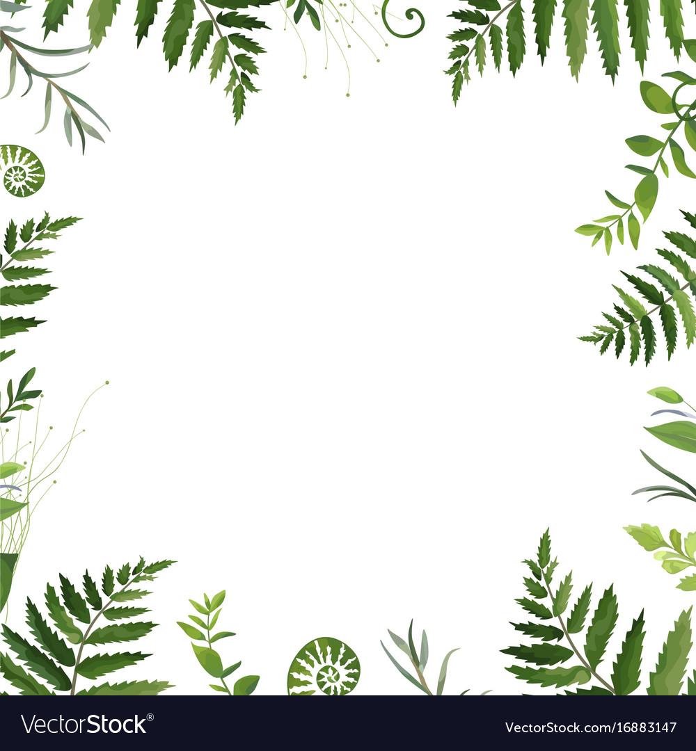 Design card natural botanical frame green forest Vector Image