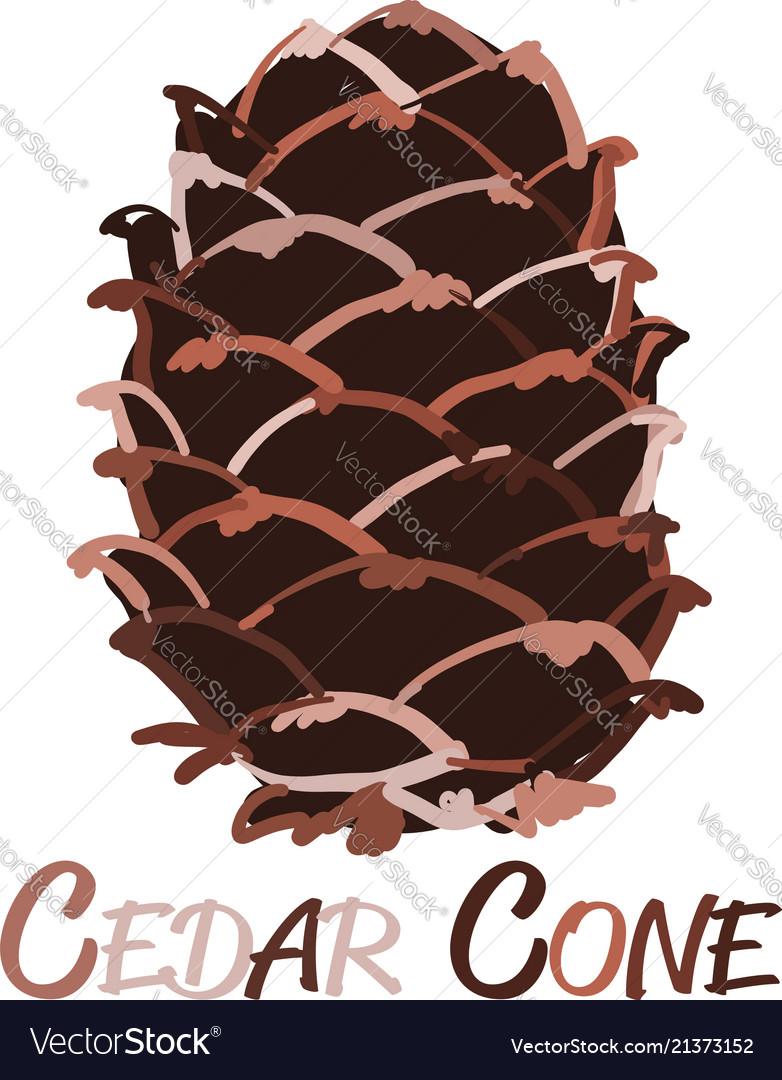 Cedar cone sketch for your design