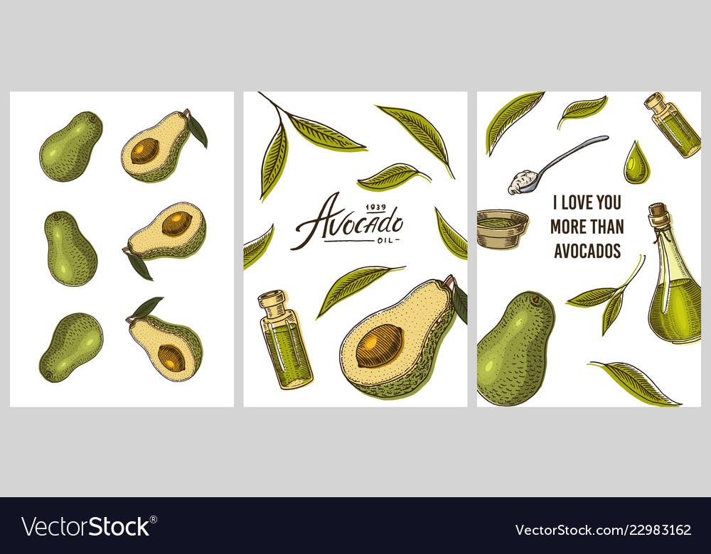Avocado cards green templates banner of organic
