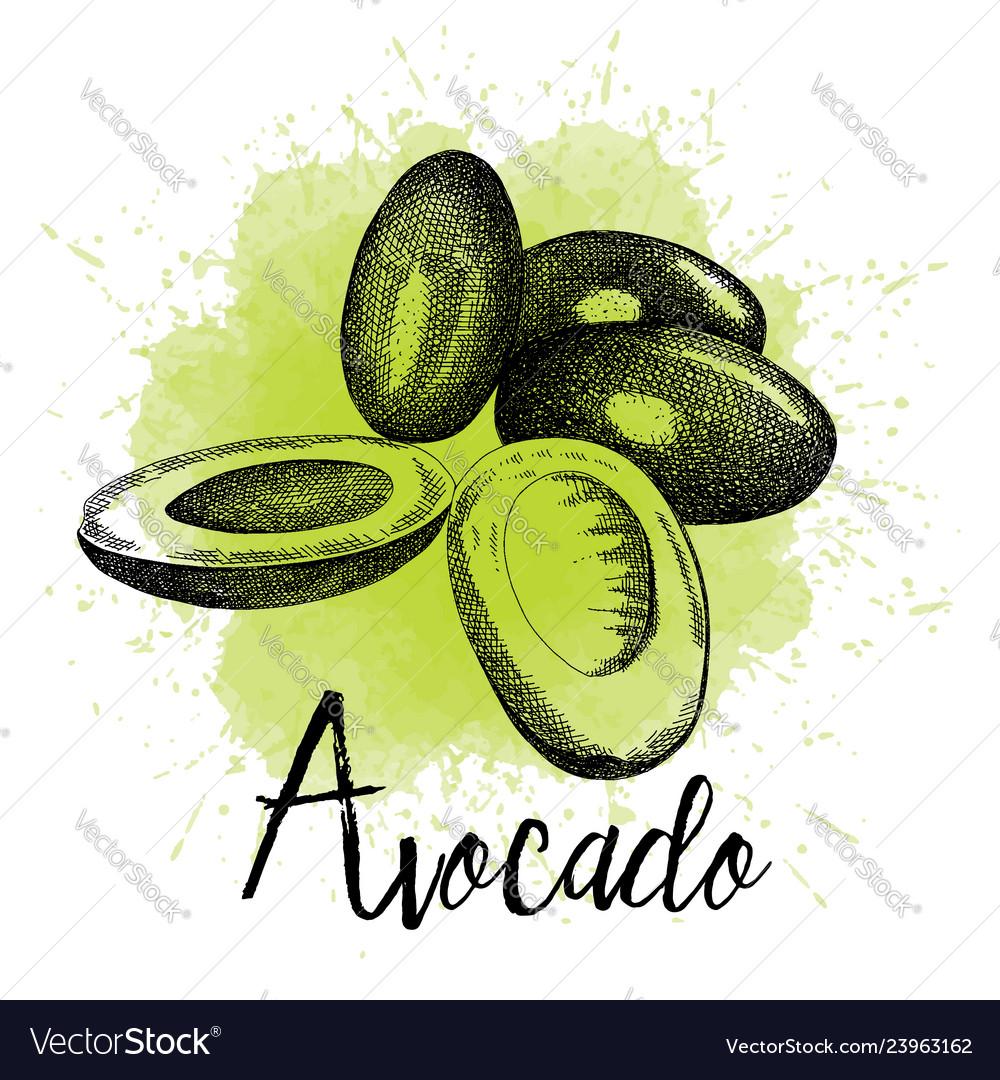 Avocado in hand drawn graphics