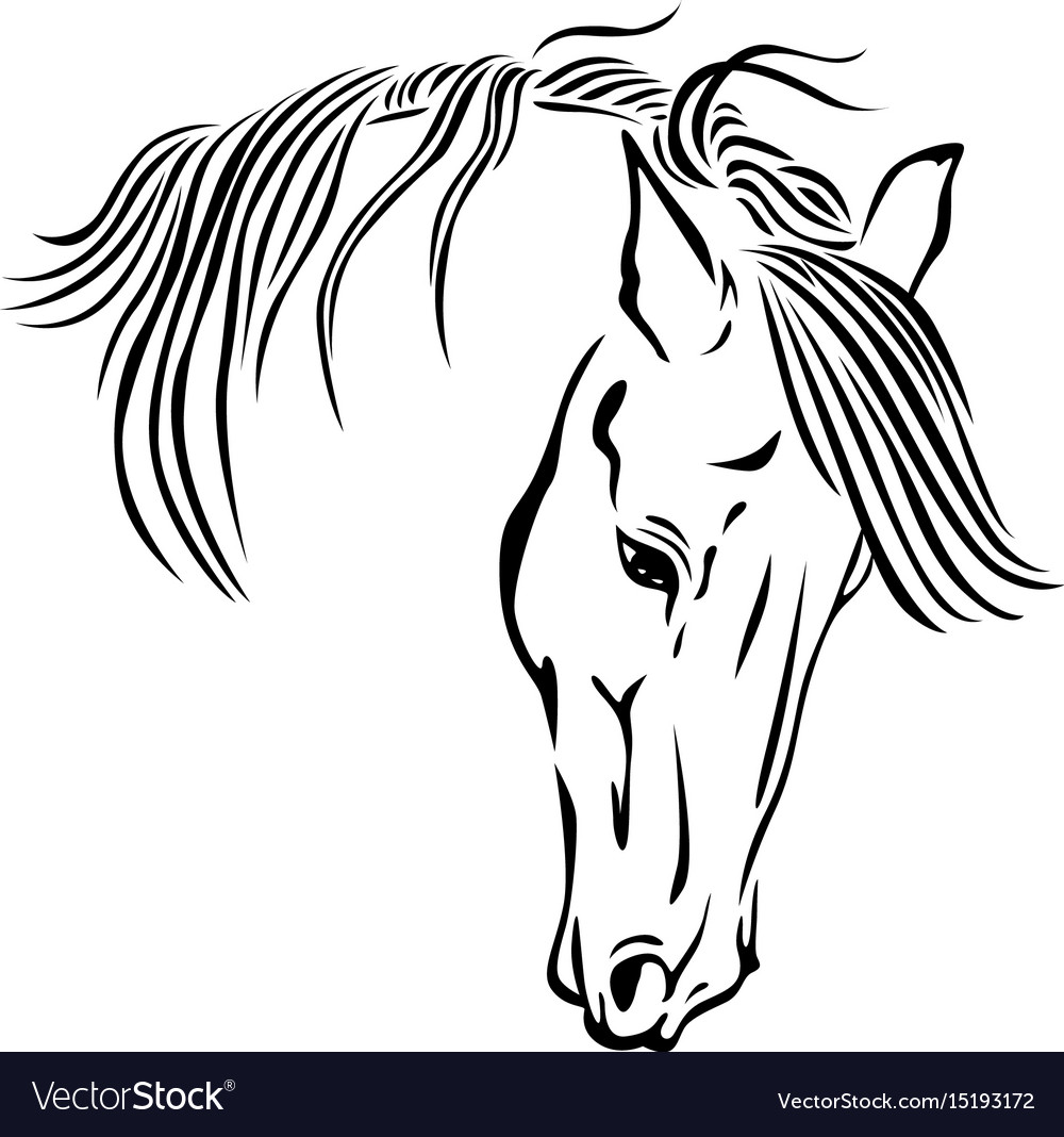 Beautiful Horse Head Royalty Free Vector Image