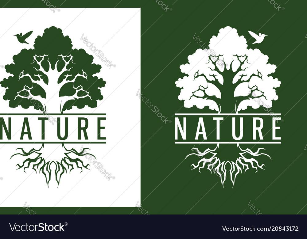 Hummingbird and tree